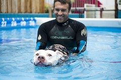 Being laughed at (lauripiper) Tags: dog water pool swimming swim nikon paloma pitbull longbeach d600 pittie 2013 dockdiving sunnydogplace larpbo losangelesresponsiblepitbullowners