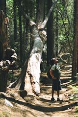 (oliviamharrison) Tags: california nationalpark nikon sequoia kingscanyon 52mm d90 nikond90