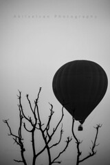 Flying High (www.akilselvan.com) Tags: travel bw india blackwhite nikon indian pushkar trade rajasthan worldtrade cwc travelphotography 55200mm cameltrade nikond7000 chennaiweekendclickers cattletrade akilselvan akilselvanphotography
