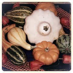 Nature Morte (pierrearnaud78) Tags: automne courges naturemorte