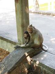 Monkey in Oudong (Yoshinori_4401) Tags: cambodia  oudong
