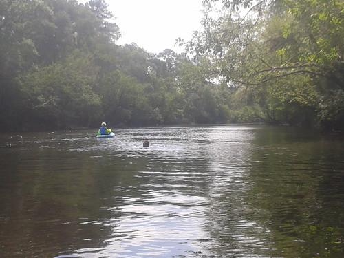 river little turtle alligator conservation watershed cypress southgeorgia outing palmetto willacoochee tupelo alapaha northflorida withlacoochee hornbridge withlacoocheeriver madisonhighway ga31 wwals clyattvillenankinlanding