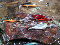 2013 ICAST Eye Catcher - Yo-Zuri 3DB Baits (Caveman Catching) Tags: lake fish outdoors 3d fishing bass prism equipment shad popper tackle lure largemouth saltwater crank freshwater caveman suspending icast 2013 crankbait markavery jerkbait topwater 3db yozuri