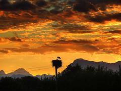 IMG_1814 sunset stork nest (pinktigger) Tags: sunset italy mountains bird nature italia nest stork cegonha cigea friuli storch cigogne ooievaar fagagna cicogna oasideiquadris feagne
