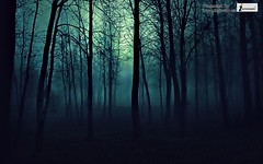 Forest Wallpaper HD (Infoway LLC - Website Development Company) Tags: wallpaper beautiful wonderful nice superb awesome images exotic hd illustrator incredible breathtaking classy mindblowing forestwallpaper responsivewebsitedesign rainforestwallpaper waterfallswallpapers greenforestwallpaper tropicalforestwallpaper forestwallpaperhd earthforestwallpaper springtimeintheforestwallpaper sunsetintheforestwallpaper summerforestwallpaper riverdeepforestwallpaper redwoodforestwallpaper responsivewebdesigncompany natureforestmorning