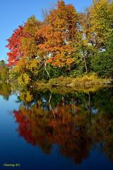 Octobre en couleurs (anjoudiscus) Tags: autumn trees fall nature colors automne reflections landscape couleurs ange 9 arbres qubec paysage reflets chromatic octobre d800 terrebonne 2013 chromatique rflexions nikkor28300mmvr lesdesmoulins fromyoutous