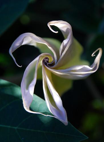Detail, Unfolding Flower, Proksa Park, IL., 2013