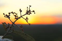 Les Merveilles du Brsil!! (monsieurlazarophotographies) Tags: flowers landscape prdosol ville farofa cuazul coresdobrasil myland vision:mountain=0526 vision:sunset=0907 vision:sky=0986 vision:outdoor=0895 vision:clouds=0795
