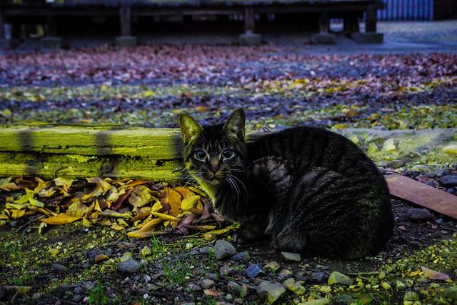 Today's Cat@2013-12-19