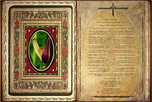 Resultado de imagen para Hechos de los apóstoles (8,5-8.14-17)