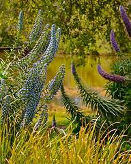 Nature (nebulous 1) Tags: california ca plants nature water nikon centralpark explore 20 huntingtonbeach feb1 2014 d7000 nebulous1