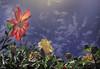 Strange (Soloross) Tags: sky italy sun flower art texture colors strange foglie clouds photoshop canon photography italian quiet image artistic painted picture experiment quadro sguardo cielo sole terra fiore colori tempo feelings immaginare silenzio sfondo fotografare pittore tranquillità