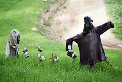 Scarecrows / Epouvantail (elyes djazz) Tags: green tunisia sony country scarecrow campagne tunisie beja randonne randonnee epouvantail djazz thibar thibarine jazirielyes cavesdethibarine cavesdethibar