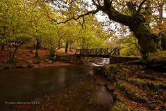 14112013_DSC8249 (Pruden Barquin) Tags: del paisaje otoño fotografia cantabria reserva tripode saja filtros polarizador otoñal ucieda nikond90 triopo nikkor1024 prudenbarquin