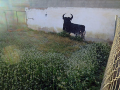 bull in the heather (maximorgana) Tags: flower fence reja bush bull silueta mata fuentealamo