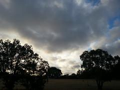 shining cloud (ClareSnow) Tags: autumn trees sky cloud silhouette twilight day cloudy dusk australia naturereserve perth cloudporn gloaming skyporn lakegwelup bushreserve lakegwelupreserve