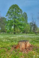 Green spring (Nenad Bogoevski Photos) Tags: tree green spring treetrunk trunk
