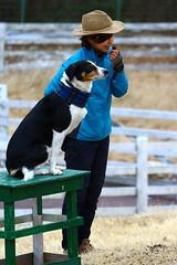 IMG_4500 (KarintoPlusjp) Tags: dogs animals japan