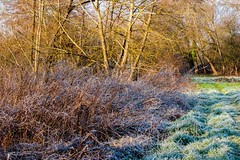 Frosty river bank (Macro light) Tags: cold ice frozen frost january worcestershire winterlandscape wintersunshine frozenlandscape riverteme beautifulbritain bransford