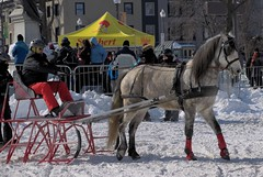 Horse - Cheval - Derby St-Hubert 2015 : Carnaval Qubec 2015 : Comptition d'attelages (eburriel) Tags: horse snow canada caballo cheval grande quebec hiver picture competition course carnaval neige derby qc ville allee sthubert  spectacle haken 2015  attelage  enganche   eburriel
