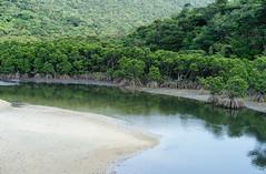 Untouched Mangroves of Iriomote-jima, Okinawa, Tropical Japan (SamKent22) Tags: wild green japan forest river island bay asia jungle swamp vegetation okinawa lush mangroves iriomote