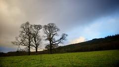 Winter Horizon (Michael Foley Photography) Tags: ireland winter landscape lakes kerry killarney gapofdunloe cokerry