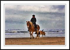 On the beach (gill4kleuren - 12 ml views) Tags: horse sarah fun saar paard haflinger