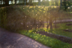 Representatives Of Summer (pni) Tags: light grass suomi finland insect helsinki mosquito hedge helsingfors skrubu pni talvipuutarha vintertrdgrden thewintergardens pekkanikrus
