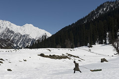 a man pulling the sledge (gurpreet_singh.) Tags: india snow man pull glacier kashmir pulling jk sledge sonamarg thajiwas