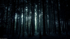 Wood for the Trees (DarkStarPhoto) Tags: trees ireland light nature beauty forest dark scary horror lowkey