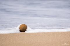 is arenas (--marcello--) Tags: sardegna sea italy seaweed beach nature nikon sardinia wave alga naturephotography isarenas d5300
