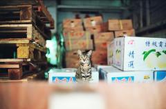 Cats in Fruit Market () Tags: street leica hk cats classic animal 35mm hongkong f14 voigtlander rangefinder snap fujifilm m6 nokton 400
