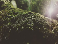 Street Photography #streetphotography #color #naturaleza #nature #arbol #tree #tronco #trunk #rama #branch #musgo #moss # iphonegraph #iphonegraphy (broe_999) Tags: naturaleza color tree musgo nature arbol moss branch streetphotography trunk tronco rama iphonegraphy iphonegraph
