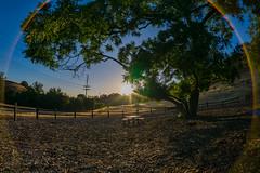 Wild Walnut Park (Torres_Visuals) Tags: california trees sun sunrise landscape scenery view sunny clearsky wildwalnut oldtopangacyn
