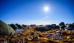 The smell of salt water and fucales (HrNes) Tags: ocean sea sun seascape sol nature seaside nikon natur sunny fisheye smell d750 blueskies tang hav facebook seawater blhimmel maritimt fucales instagram