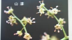DSC07608 (yongheecs永和社大生態保育社) Tags: 林場