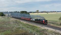 Echuca Explorer (Dobpics O'Brien) Tags: explorer victorian engine rail victoria steam locomotive railways vr srv echuca nagambie r761 steamrail