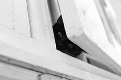 peek-a-boo (cooper.moy) Tags: street black cute window nature animal contrast cat 50mm nikon kitten artistic sydney adorable kitty peeking tone d5300