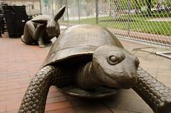 Turtoise! (Trident2828) Tags: rabbit boston hare turtle tortoise fable