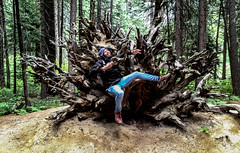 IMG_8610.jpg (edcool1_1) Tags: yosemitevalley california unitedstates us yosemite yosemitenationalpark
