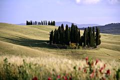 (claudiophoto) Tags: trees alberi landscape unesco tuscany toscana paesaggitoscani tuscanylandscape italianhills fototoscana immaginetoscana tuscanyimagy