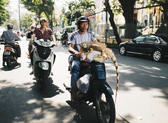 The Vietnamese Style of Transportation... (desomnis) Tags: street travel urban animal asia southeastasia snapshot transport streetphotography sigma streetlife vietnam motorbike iguana transportation traveling hochiminhcity hcmc travelphotography streetcandid canon6d desomnis