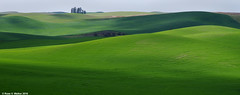 Shadow Hills (walkerross42) Tags: washington shadows farm curves hills fields palouse steptoe pentaxart