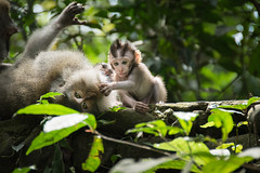 Monkey Family (eslukash) Tags: monkey monkeys animal animalphotography wildlife wildlifephotography animalsinthewild monkeyfamily tender tenderness care together togetherness closeness rainforest jungle authentic inthemoment animals familytime