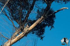20160415-2ADU-041 Kangaroo Island