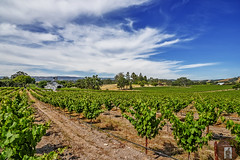 Wine Country California-Central-Coast (randyandy101) Tags: california trees vines view wine bluesky winery vineyards grapes vista winecountry pasorobles californiacentralcoast whiteclouds highway46