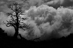 Après l'orage... After the thunderstorm... #Darktable #FujiX-S1 (ImAges ImprObables) Tags: blackandwhite bw montagne noiretblanc plateau nb ciel nuage commune vercors arbre orage drôme traitement rhônealpes vallondecombeau treschenucreyers darktable fujixs1 hautplateauduvercors