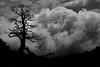 Après l'orage... After the thunderstorm... #Darktable #FujiX-S1 (ImAges ImprObables) Tags: blackandwhite bw montagne noiretblanc plateau nb ciel nuage commune vercors arbre orage drôme traitement rhônealpes vallondecombeau treschenucreyers darktable fujixs1 hautplateauduvercors