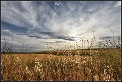 Simplicidad (Fernando Fornis Gracia) Tags: espaa aragn zaragoza leciena sanmateo monegros paisaje landscape cielo nubes contraluz naturaleza