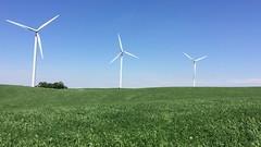 Summer Breeze (Madison Guy) Tags: summer field wisconsin rural wind farm alternativeenergy breeze windpower alfalfa windturbines sustainableenergy